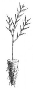 tubelings